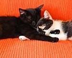 Blacky a Anička